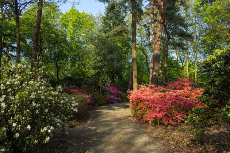 Rhododendron Park - Bremen attractions