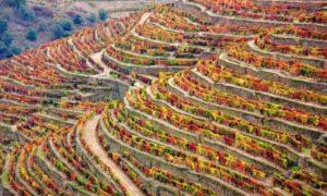 ポルトガルのおすすめ観光スポットTOP25