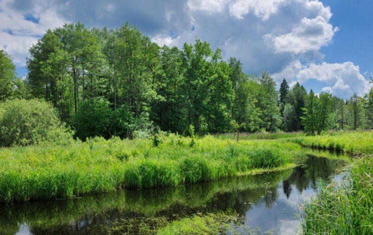 Достопримечательности Белоруссии - Березинский биосферный заповедник