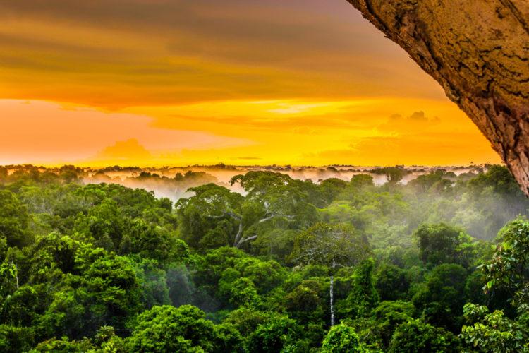 Достопримечательности Бразилии - Тропические леса Амазонки