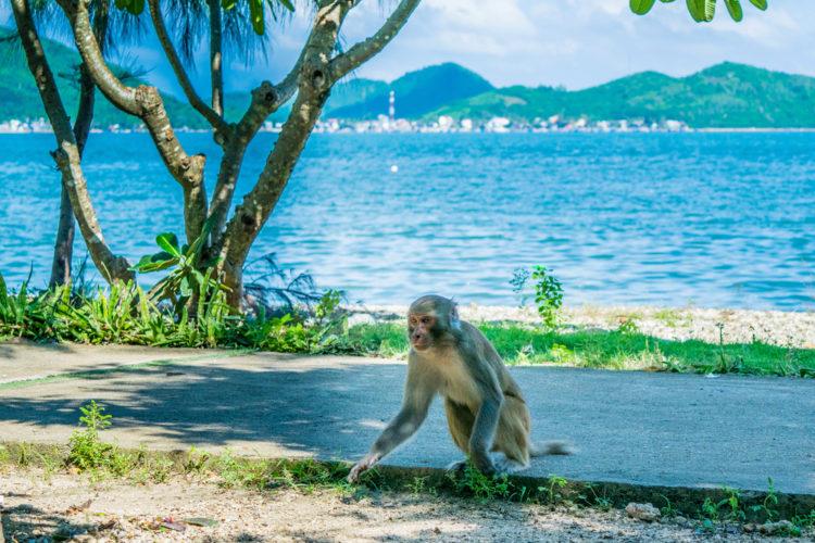 Достопримечательности Вьетнама - Остров обезьян