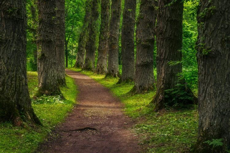 Что посмотреть в Эстонии - Парк Тойла-Ору