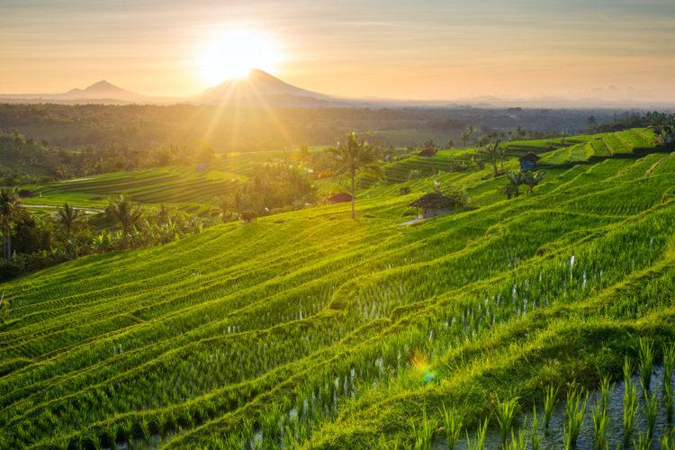 Достопримечательности индонезии - Рисовые террасы Джати Луви