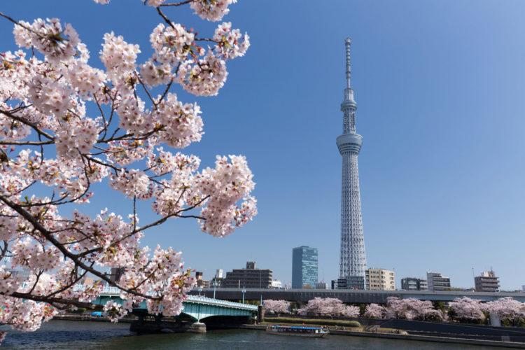Достопримечательности Японии - Небесное дерево