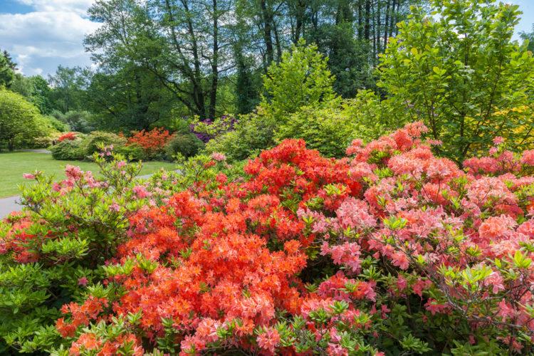 Что посмотреть в Латвии - Ботанический сад