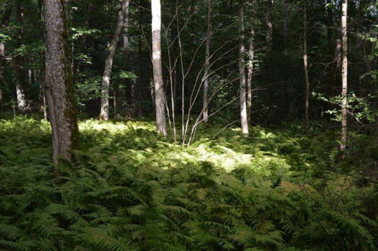 Природный заповедник Рамшолмен на Аландских островах, Финляндия