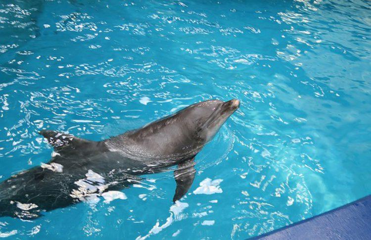Дельфинарий в Небуге, Туапсинский район, Краснодарский край, Россия