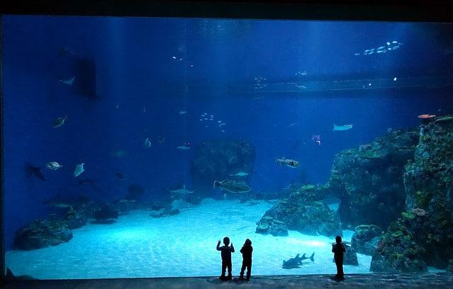 Национальный аквариум Дании в Дании