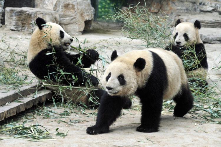 Пекинский зоопарк - достопримечательности Пекина