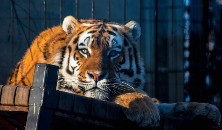 Зоопарк Коркеасаари в Хельсинки - достопримечательности Хельсинки, Финляндия