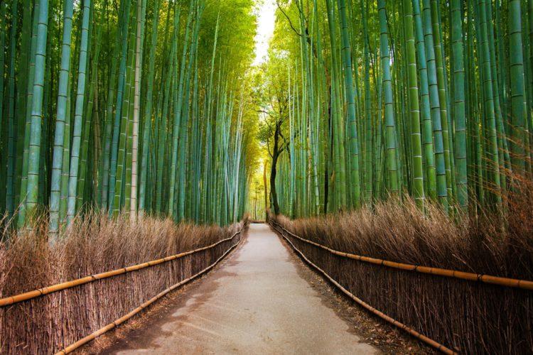 Бамбуковая роща в Сагано - достопримечательности Киото, Япония