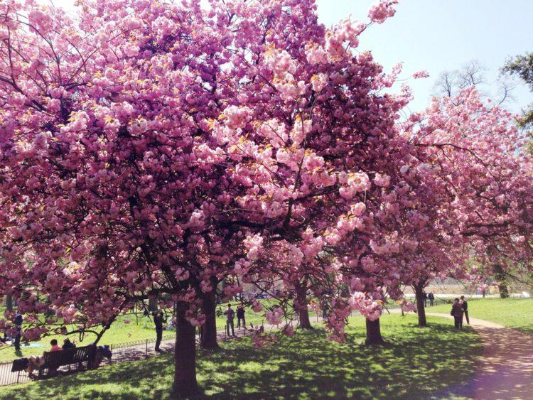 Гайд-парк (Hyde park) - королевский парк в Лондоне - Что посмотреть в Лондоне