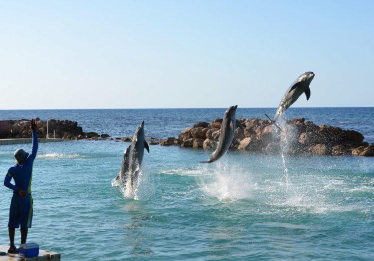 Долфин-Коув - достопримечательности Ямайки