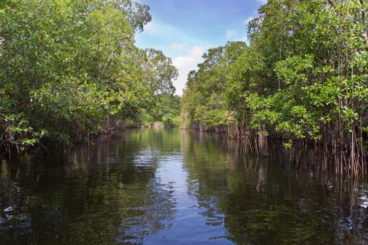 Река Блэк-Ривер - достопримечательности Ямайки