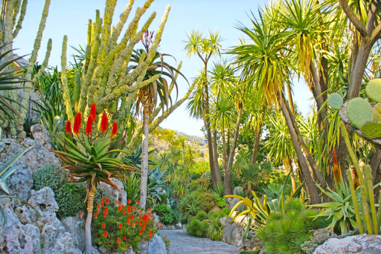 Ботанический сад Монако - достопримечательности Монако