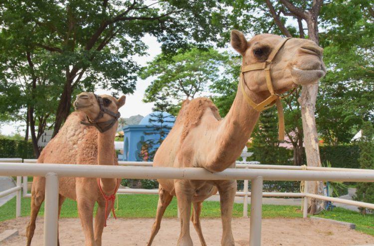 Зоопарк Кувейта - достопримечательности Кувейта