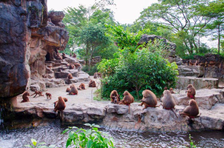 Зоопарк Сингапура (Singapore Zoo) - достопримечательности Сингапура