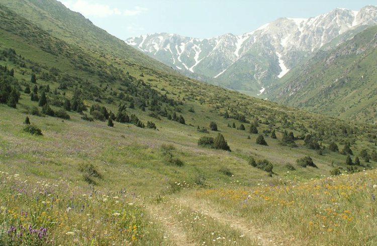 Аксу-Жабаглинский заповедник - достопримечательности Казахстана