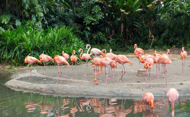 Парк птиц Джуронг - достопримечательности Сингапура