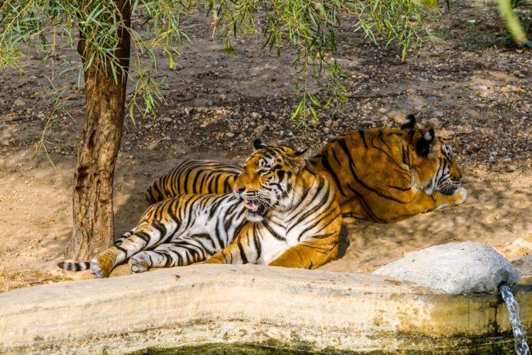 Зоопарк Фригия - достопримечательности Туниса