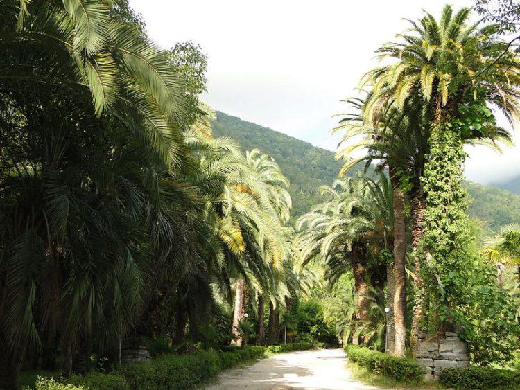 Приморский парк (Гагры) - достопримечательности Абхазии