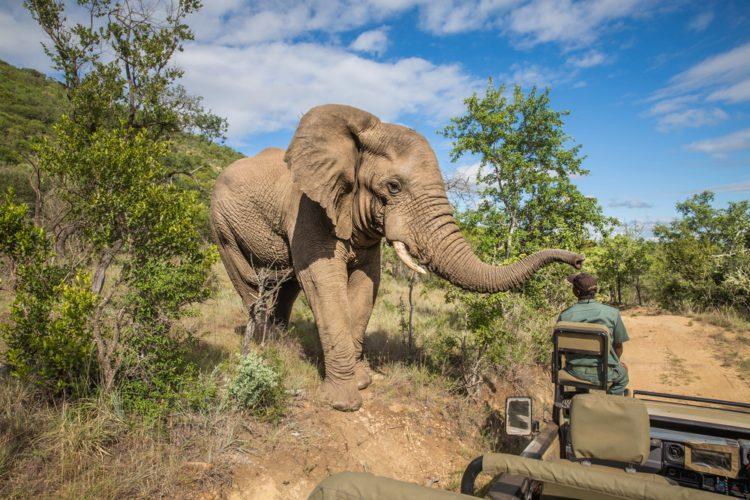 Национальный парк Крюгер - достопримечательности ЮАР