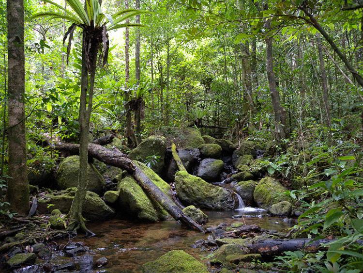 Тропические леса Ацинананы - достопримечательности Мадагаскара