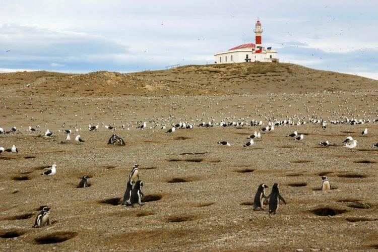 Остров Магдалены - достопримечательности Чили