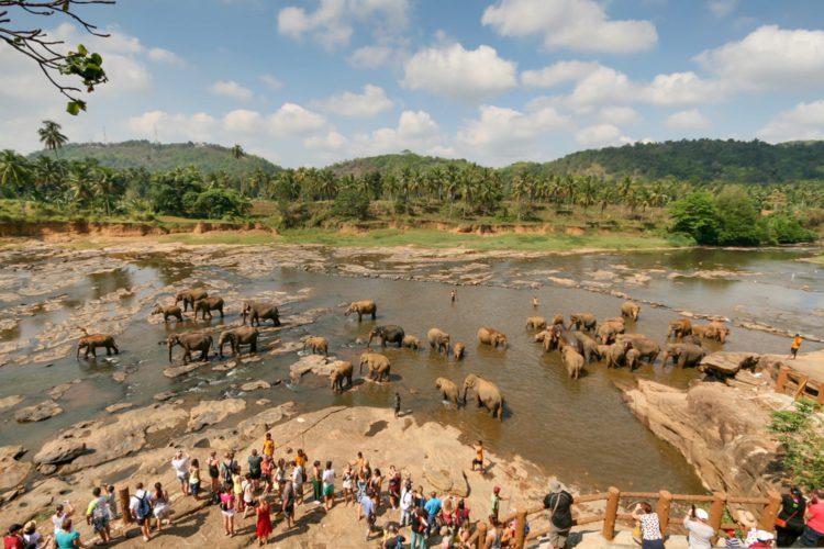 Приют для слонов Пиннавела - достопримечательности Шри-Ланки