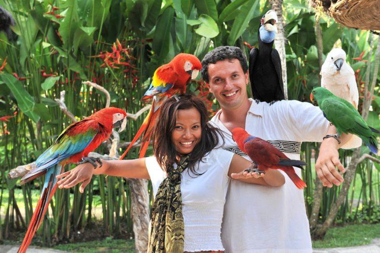 Парк птиц на Бали - достопримечательности Бали