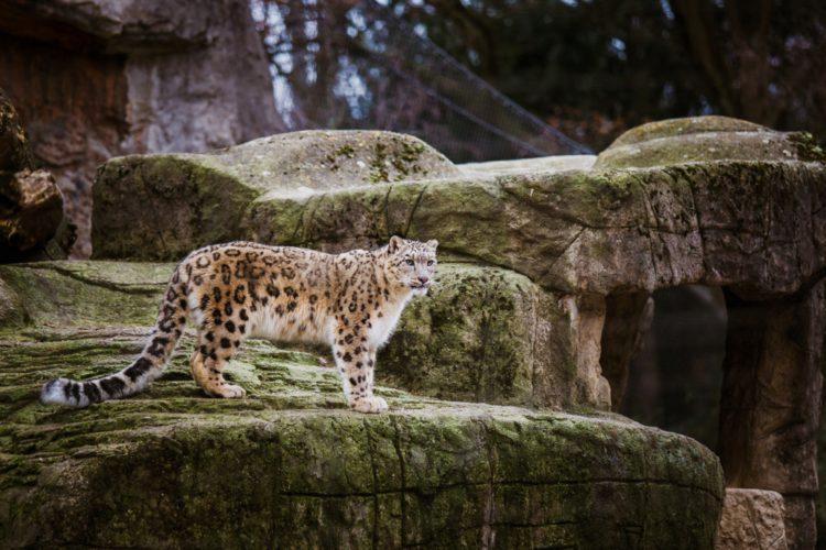 Базельский зоопарк - достопримечательности Базеля