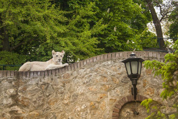 Белградский зоопарк - достопримечательности Белграда