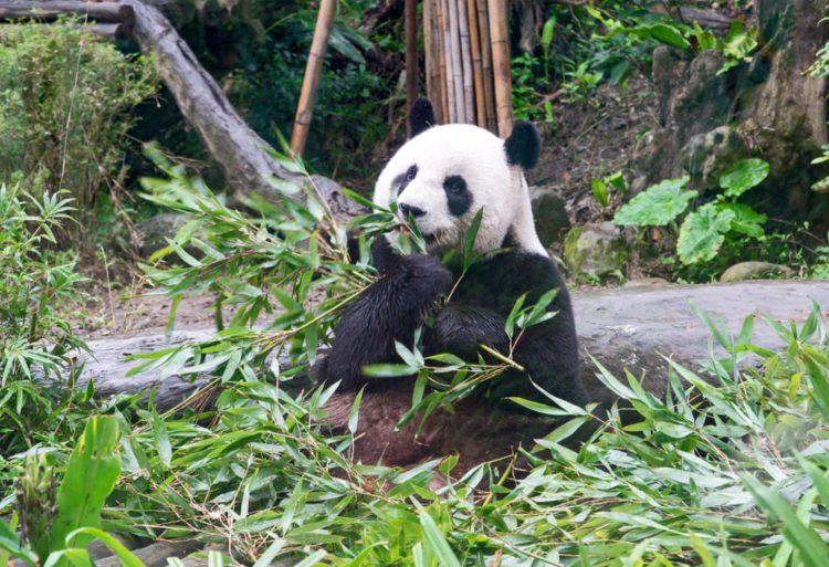 Тайбэйский зоопарк - достопримечательности Тайваня