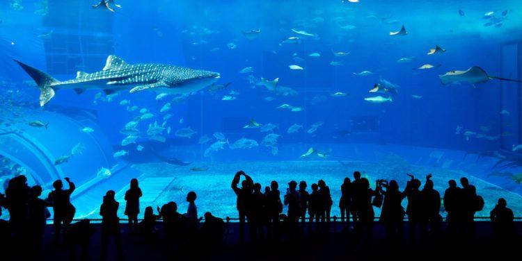Аквариум в Дубай Молл - достопримечательности Дубая