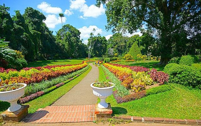 Королевский ботанический сад в Парадении - достопримечательности Шри-Ланки