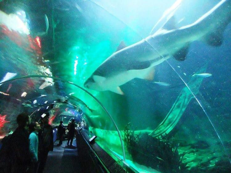 Подводный мир Келли Тарлтона - достопримечательности Новой Зеландии