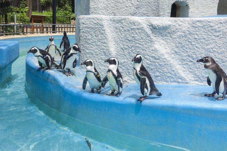 Зоопарк Уэно - достопримечательности Токио