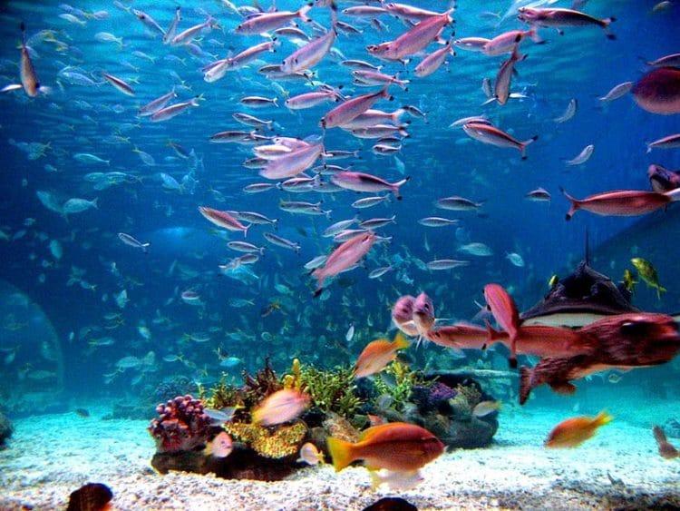 Манила Оушен Парк (Manila Ocean Park) - достопримечательности Филиппин