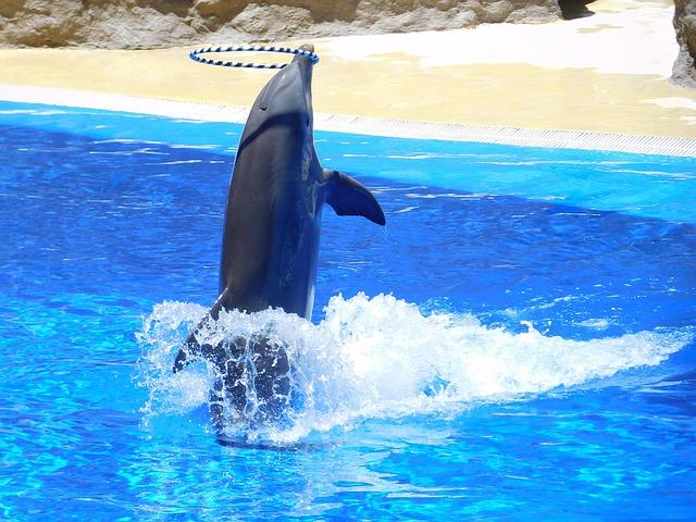 Дельфинарий - достопримечательности Дубая