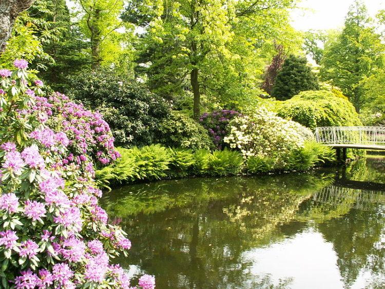 Ботанический сад «Арборетум Тромпенбург» - достопримечательности Роттердама