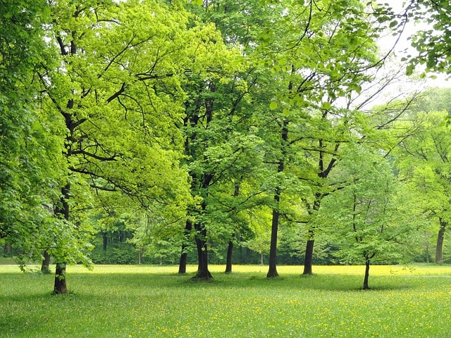 Ботанический сад - достопримечательности Витебска