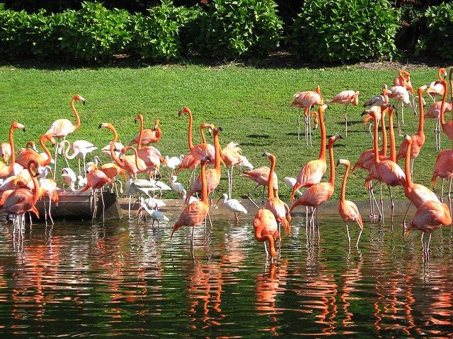 Парк развлечений Джангл Айленд - достопримечательности Майами