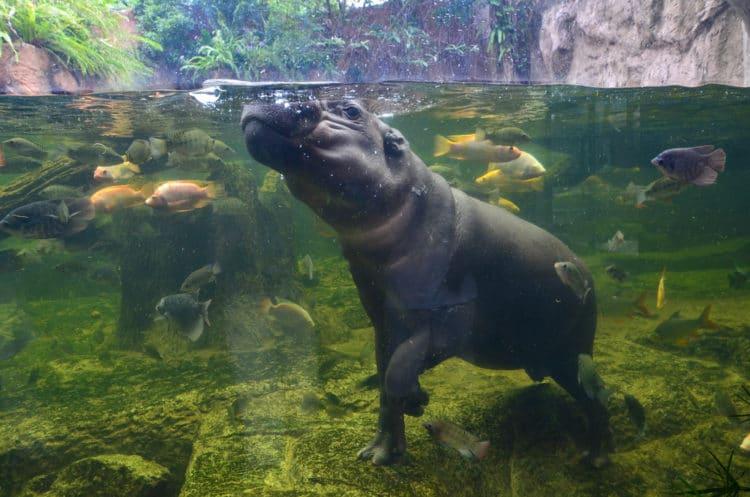 Зоопарк Кхао Кхео - достопримечательности Паттайи