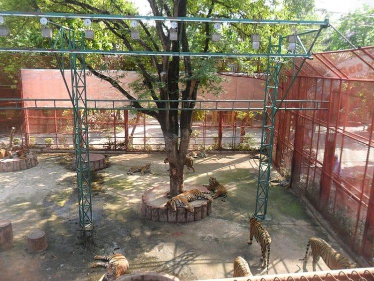 Тигровый зоопарк Сирача - достопримечательности Паттайи