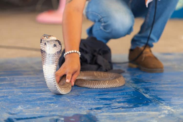 Змеиная ферма - достопримечательности Паттайи