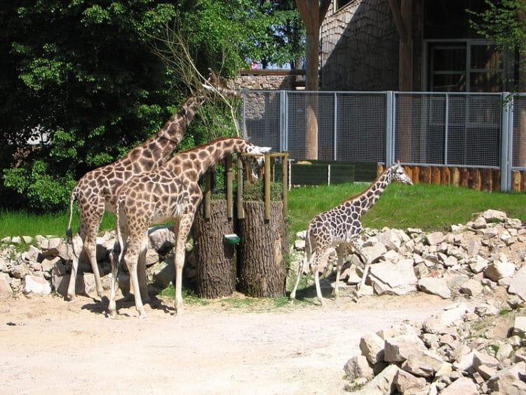 Рижский зоопарк - достопримечательности Риги