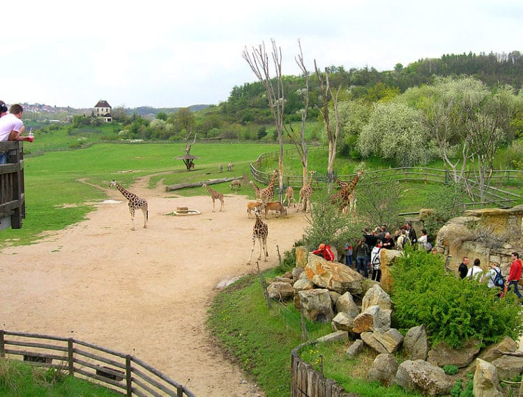 Пражский зоопарк - достопримечательности Праги