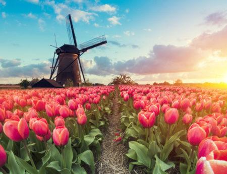 Достопримечательности Роттердама: Топ-20
