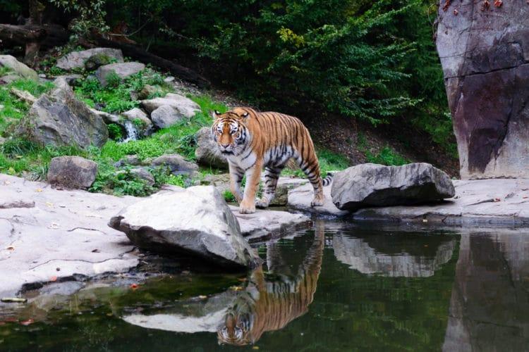 Цюрихский зоопарк - достопримечательности Цюриха
