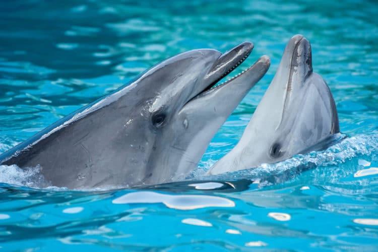 Дельфинарий Кемера - достопримечательности Кемера